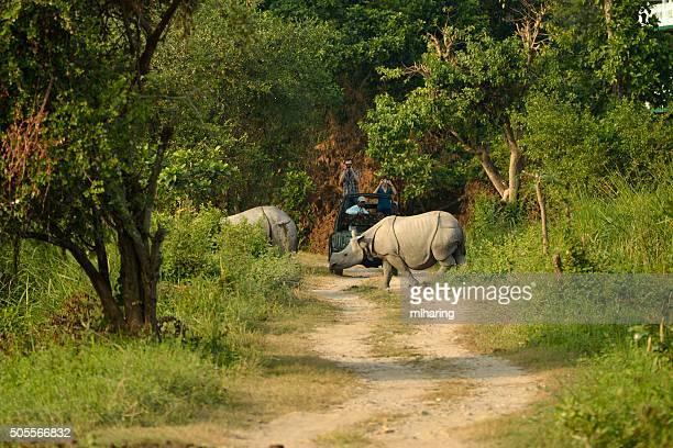 great indian rhino - kaziranga national park stock pictures, royalty-free photos & images
