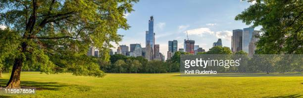 great lawn in central park on a summer evening - central park manhattan stock pictures, royalty-free photos & images