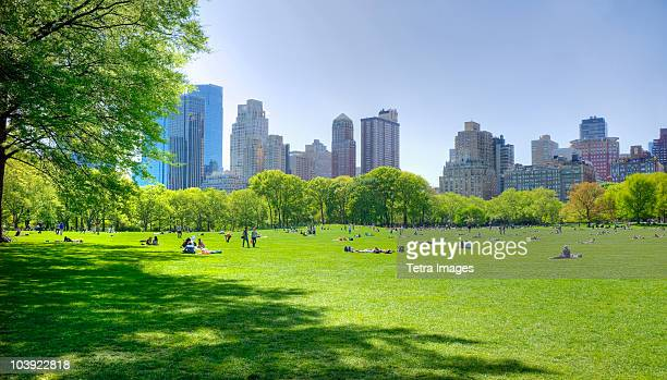 great lawn in central park - park stock-fotos und bilder