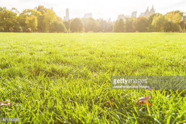 great lawn in sunlight - prado - fotografias e filmes do acervo