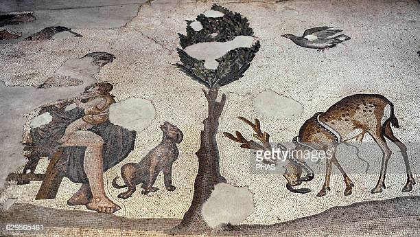 Great Palace Mosaic Museum 4th6th centuries Detail of a mosaic depicting a nursing mother and dog Istanbul Turkey