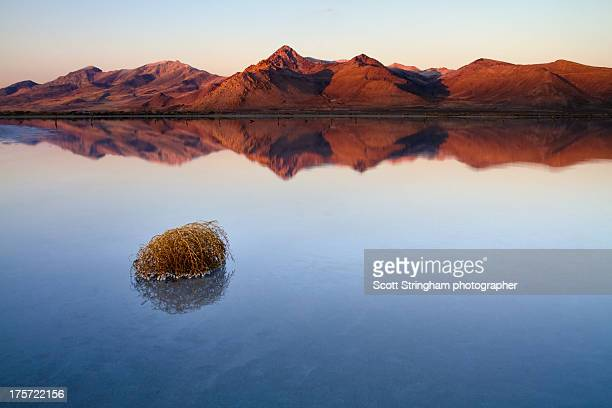 great salt lake, utah - great salt lake stock pictures, royalty-free photos & images