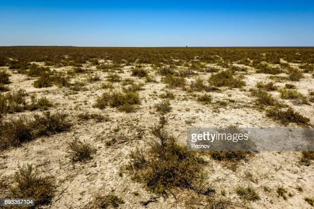 great sandy desert - great sandy desert fotografías e imágenes de stock