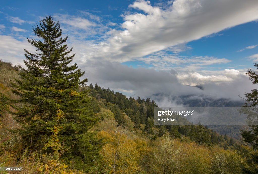great Smoky Mountains at Clingman's Dome : Stock Photo
