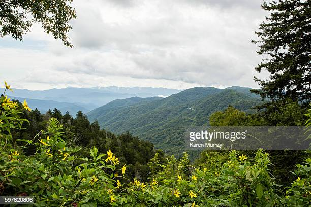great smoky mountains national park overlook into north carolina - parque nacional das great smoky mountains - fotografias e filmes do acervo