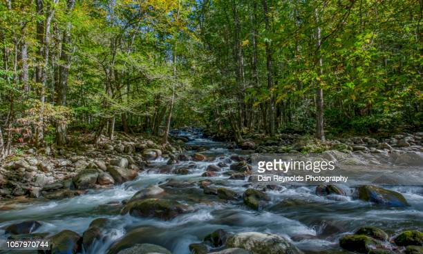 great smoky mountains national park,usa - newfound gap stock pictures, royalty-free photos & images