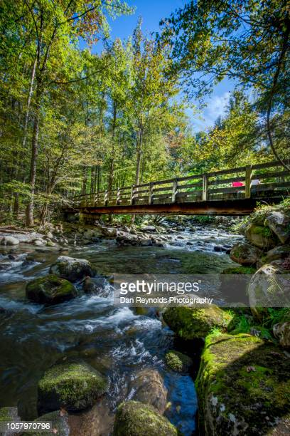 great smoky mountains national park,usa - newfound gap stock photos and pictures