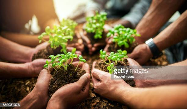 great things flourish with teamwork - sapling stock photos and pictures