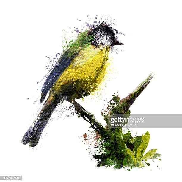 great tit bird illustration - perching stock pictures, royalty-free photos & images