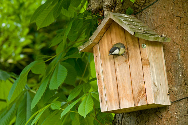 great tit (parus major) in nesting box, ile de france, europe, france, europe - birdhouse stock pictures, royalty-free photos & images