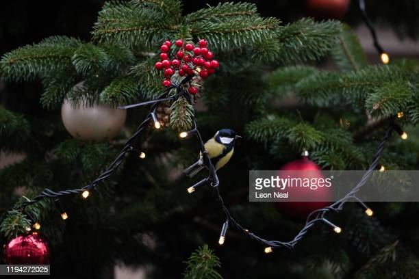 Great tit sits next to the baubles in the Christmas tree as the press wait for politicians on Downing Street on December 16, 2019 in London, England....
