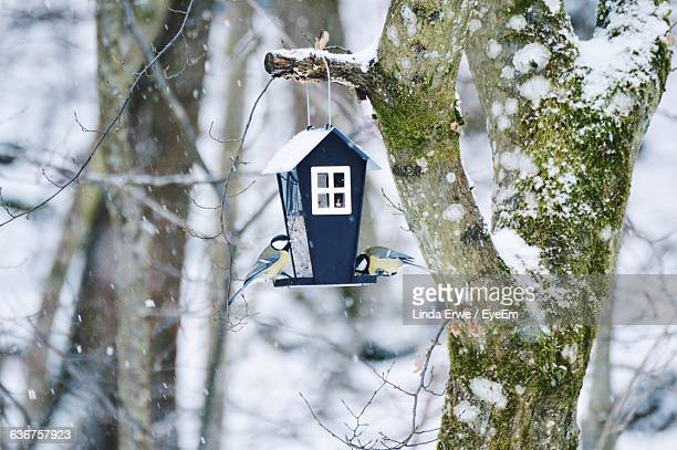 great tits perching on bird house in forest during winter - birdhouse stock pictures, royalty-free photos & images
