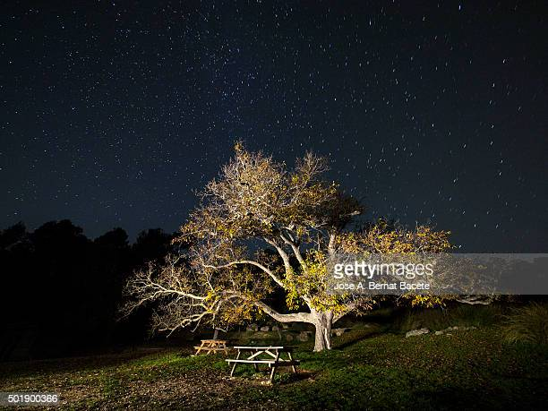 Great walnut in an area of picnic in the mountain, one autumn night.