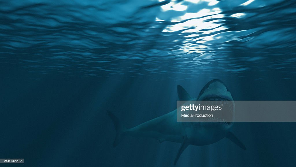Great white shark, mouth stretched just before attacking : Stock Photo