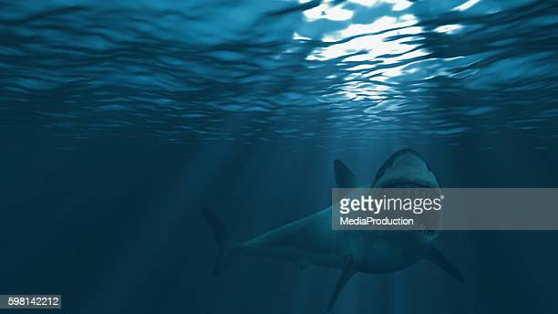 great white shark, mouth stretched just before attacking - great white shark stock photos and pictures