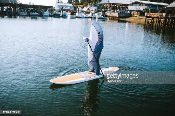 great white shark riding on paddleboard - irony stock pictures, royalty-free photos & images