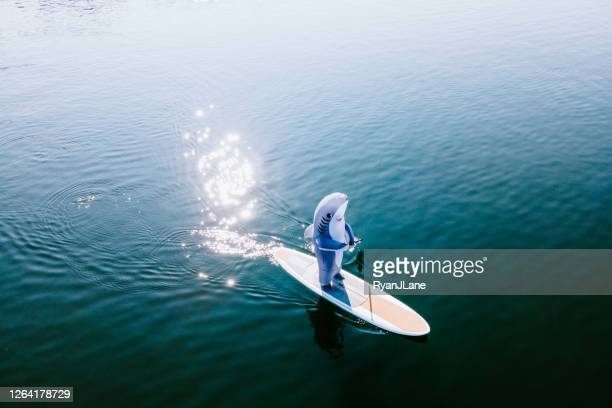 great white shark riding on paddleboard - shark stock pictures, royalty-free photos & images