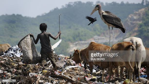 A Greater Adjutant Stork stands as a ragpicker collects recyclables at the biggest garbage dump in the northeastern state of Assam on the eve of...