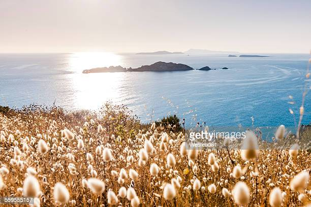 Greece, Corfu, Afionas, grasses at the coast