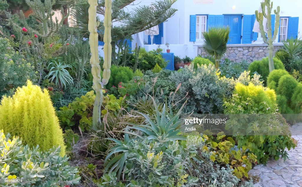 Greece, Cyclades, Santorini Island (also Thera or Thira): gardens with numerous varieties of plants adapted to the Mediterranean climate, in Kamari, Santorini archipelago.