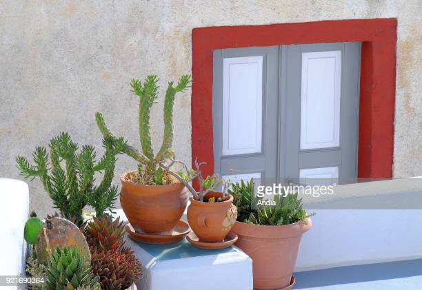 Greece Cyclades Santorini Island plants with thorns adapted to the Mediterranean climate and door of a traditional house in the village of Fira...