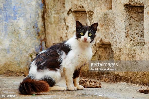 Greece, Dodecanese, Kos island, Cat