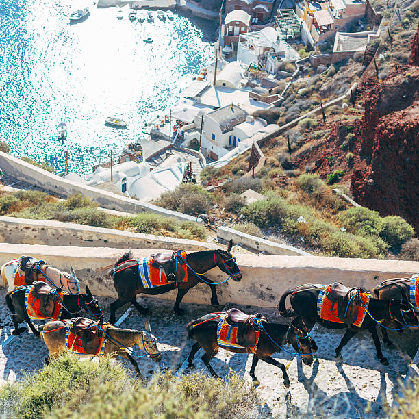 Greece donkey Santorini