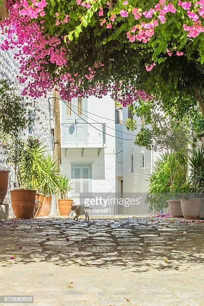Greece, Hydra, walking cat in the shadow