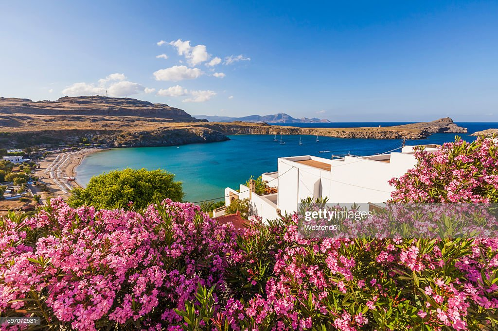 Greece, Rhodes, Lindos, View of bay. oleander in the foreground : Stock Photo
