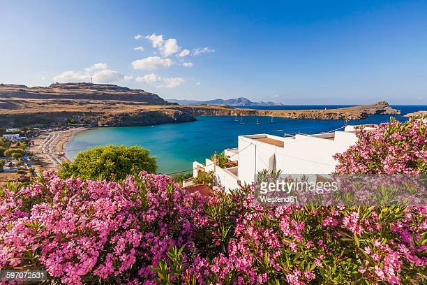 greece, rhodes, lindos, view of bay. oleander in the foreground - lindos stock photos and pictures
