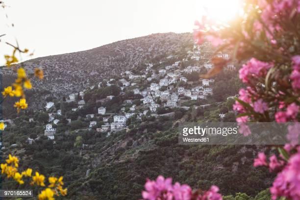 greece, thessalia, makrinitsa, mount pilion against the sun - pelion stock pictures, royalty-free photos & images