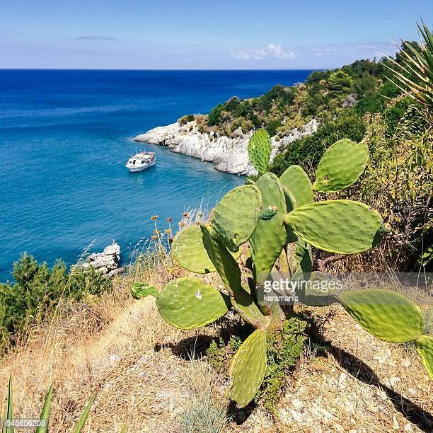 Greece, Zakynthos, Karamanis, Prickly pear on cliff by sea