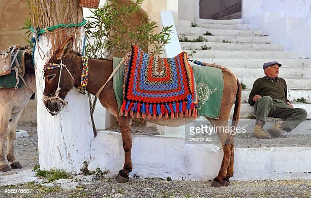 Grec âne