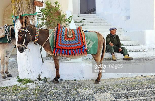 grego burro - mula imagens e fotografias de stock