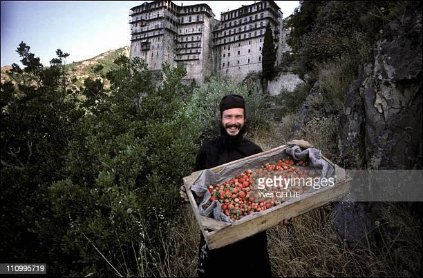Greek Monasteries 1990 2003 Athos Picking Strawberries At Simonopetra In Greece In 2003