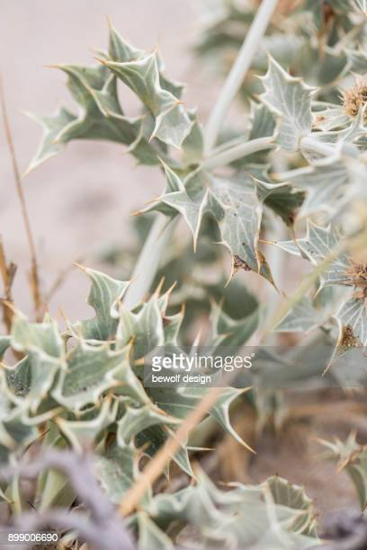 greek nature details - island crete - natur stock pictures, royalty-free photos & images
