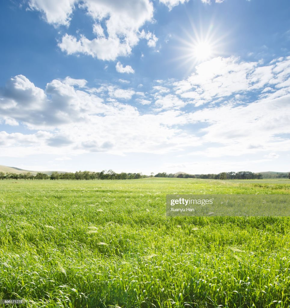 green agriculture and blue sky : Photo