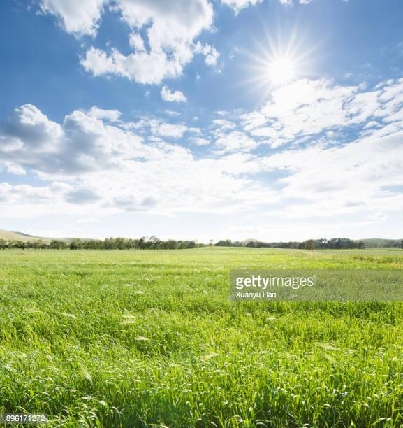 green agriculture and blue sky - sonnig stock-fotos und bilder