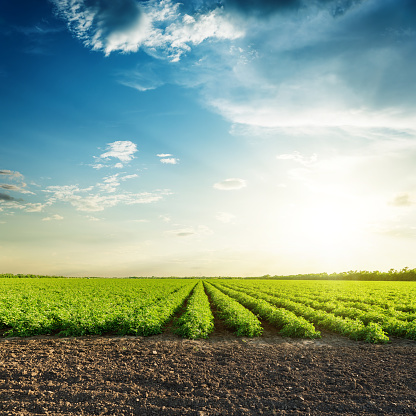 green agriculture fields and sunset in blue sky with clouds 926547380