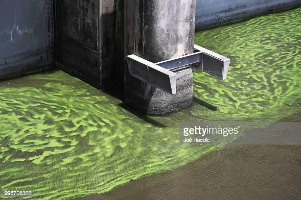 Green algae blooms are seen at the Port Mayaca Lock and Dam on Lake Okeechobee on July 10 2018 in Port Mayaca Florida Gov Rick Scott has declared a...