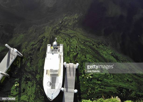Green algae blooms that come mostly from the controlled discharges of water from Lake Okeechobee are seen next to a boat along the Caloosahatchee...