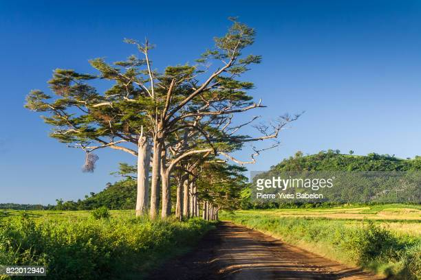 green alley - pierre yves babelon madagascar stock pictures, royalty-free photos & images