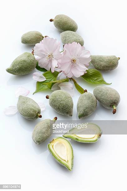 Green almonds and almond flowers