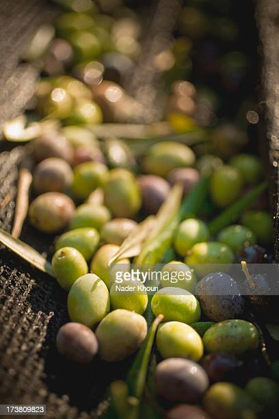 green and black olives in basket - healdsburg stock pictures, royalty-free photos & images