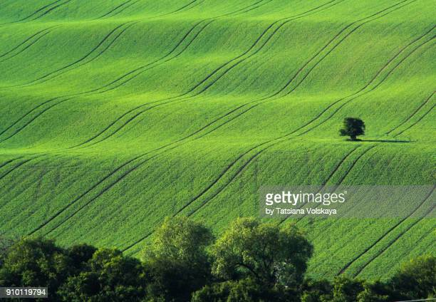Green and gray spring field abstract background
