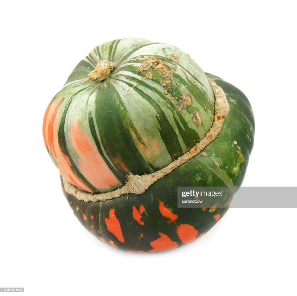 Green and orange turban squash : Stock Photo
