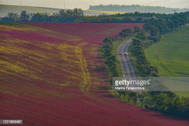 green and red waves of fields in south moravia. - czech republic stock pictures, royalty-free photos & images