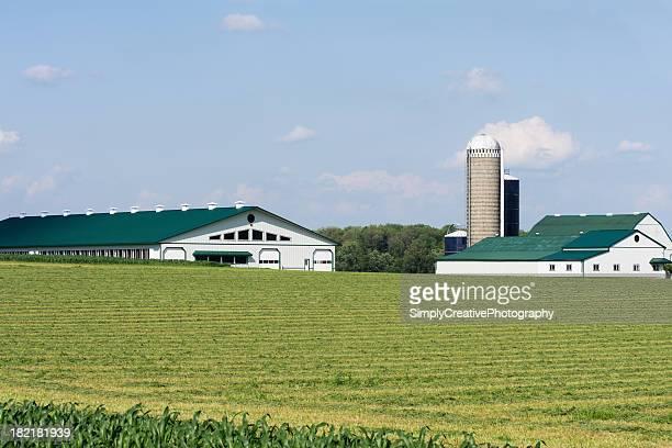 グリーンとホワイトの酪農場