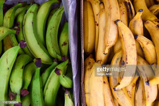green and yellow plantains - sergio amiti stock pictures, royalty-free photos & images