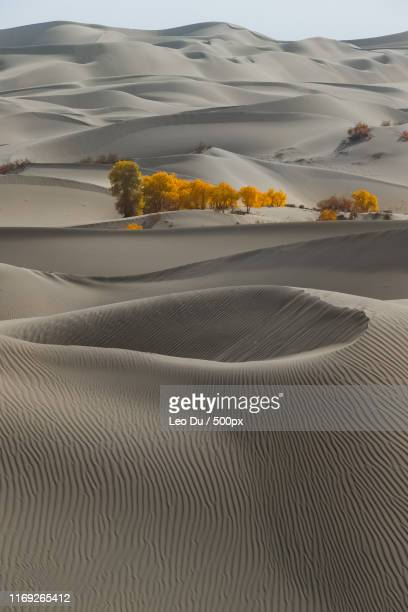 green and yellow trees in row on desert - nature stock pictures, royalty-free photos & images